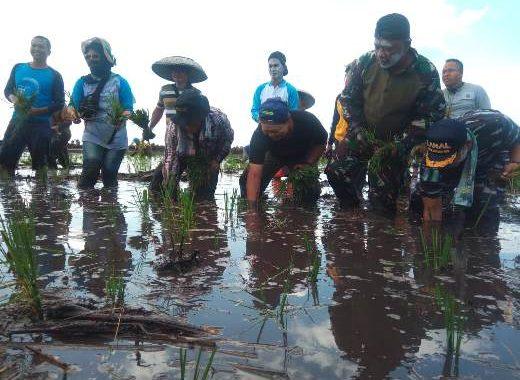 Totalitas Gubernur Kalsel Wujudkan Lumbung Padi Nasional