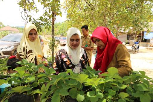 Asma Toga Jadi Nilai Tambah Pendapatan Keluarga