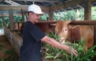 Malik, Politikus Nasdem yang Sukses Bertani dan Berpolitik
