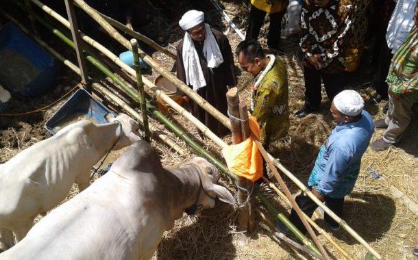 Kemenko Perekonomian Salurkan Bantuan Rp 1.88 M Untuk Ternak di Kalsel