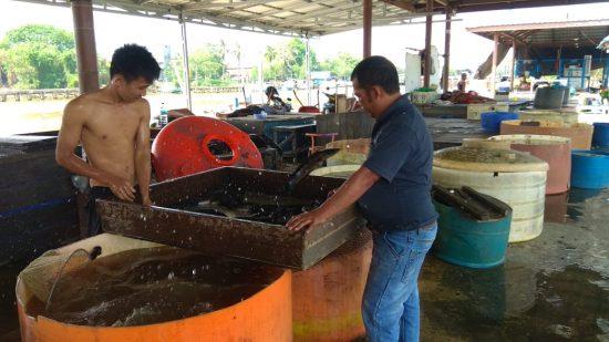 Kemarau, Pasokan Ikan di Pelelangan RK Ilir Menurun