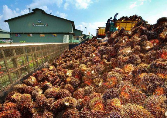 ekspor sawit