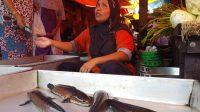 Ikan Gabus Menjadi Penyumbang Inflasi Terbesar di Banjarmasin