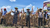 Kadis Pertanian Kotabaru Bangga Lahan Subur di Desa Sengayam.