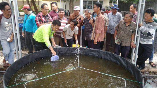 Peluang !. Budidaya Ikan Sistem Bioflok