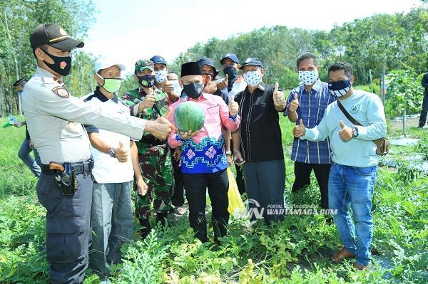 Panen ke-3 Kelompok Tani Sari Mulia Sukses. Bupati Wahid Dorong Pemuda Ikut Majukan Pertanian